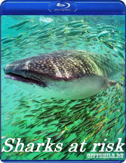 Скачать Акулы в опасности (2006) HDTVRip 1080i